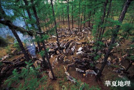 最后的驯鹿民族-敖鲁古雅鄂温克(二) - 华夏地理 - 华夏地理的博客