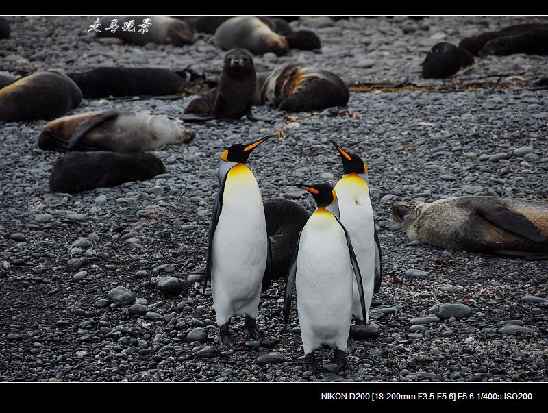 啊,南极(九) - 西樱 - 走马观景