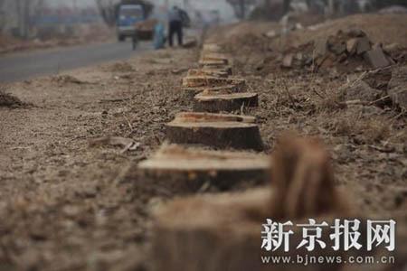 燕山毁林事件之三:两万颗树的呐喊! - 何三坡 - 燕山何三坡