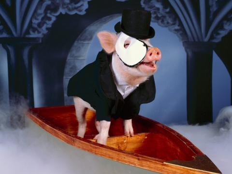 (原创)人应该像猪一样地活着 - 漫天大雪 - 漫天大雪的博客