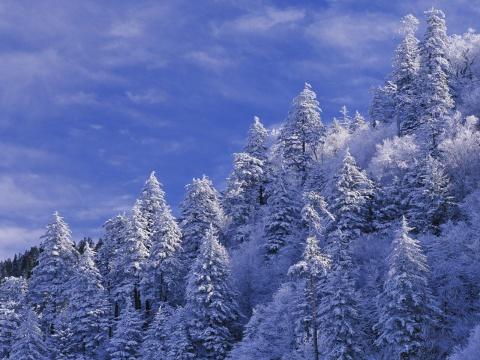 原创-现代-诗歌《寒冷的北风》文/光明之子 - 光明之子 - zhengchaoying博客