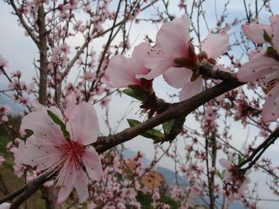 还来看桃花 - kivo - 念情书◎優しい時間