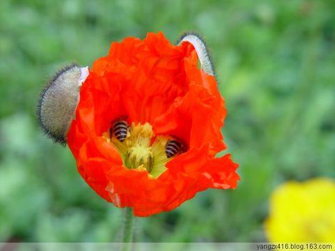 恶之花--我的摄影 - angel.yzx - 惠风和畅