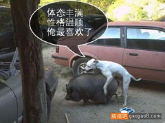 hehe520 pk 余秋雨 - hehe520 - hehe520
