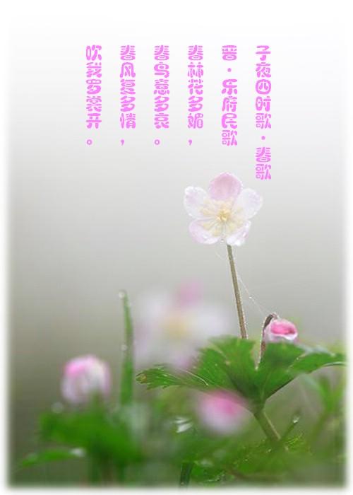 关于春天的古诗词_春天古诗词手抄报边框_庞中华古诗词行书字帖
