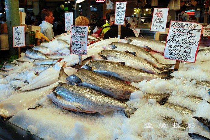 在西雅图逛海鲜市场 - Y哥。尘缘 - 心的漂泊