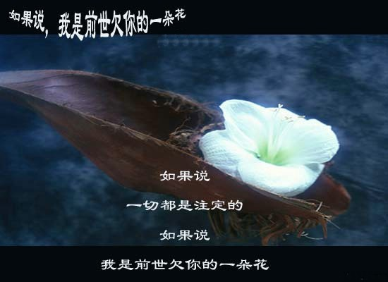如果我是前世欠你的一朵花 - 春暖花会开 - 春暖花会开的BLOG
