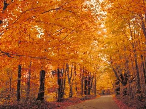 世界上最美的50条路 - 宝贝梦 - 分享美丽.分享快乐.品味人生