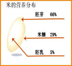 吃大米的革命:胚芽米最好!【原创】 - 天涯咫尺 - 天涯咫尺
