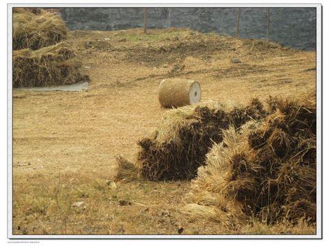 家乡老人们有句流传下来反映秋收忙的俗语图片
