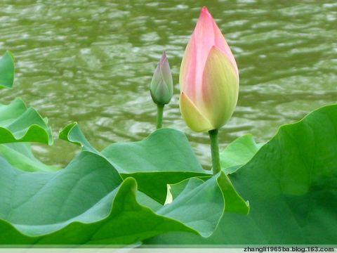 引用 我的博客 - 春暖花开 - 春暖花开