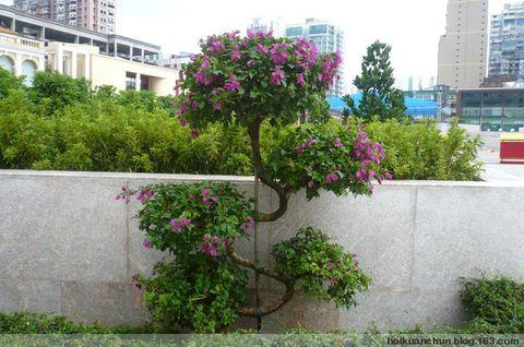 澳門塔石廣場 [原創] - 小芸 - 澳門 許雲的博客