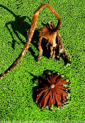 鳄拙集-08-85 - 乒乓孑孓 - 乒乓孑孓