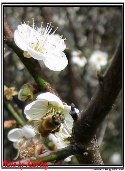 群蜂亂舞 - 曉風殘月 - 曉風殘月的博客