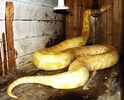 蟒蛇 - 史提芬邹 - 史提芬邹的博客