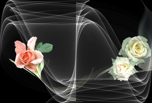 一组漂亮的花旋律图片 - 理睬 - .