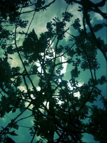 飞鸟集 - 真水无香  - 香格里拉 花开的地方