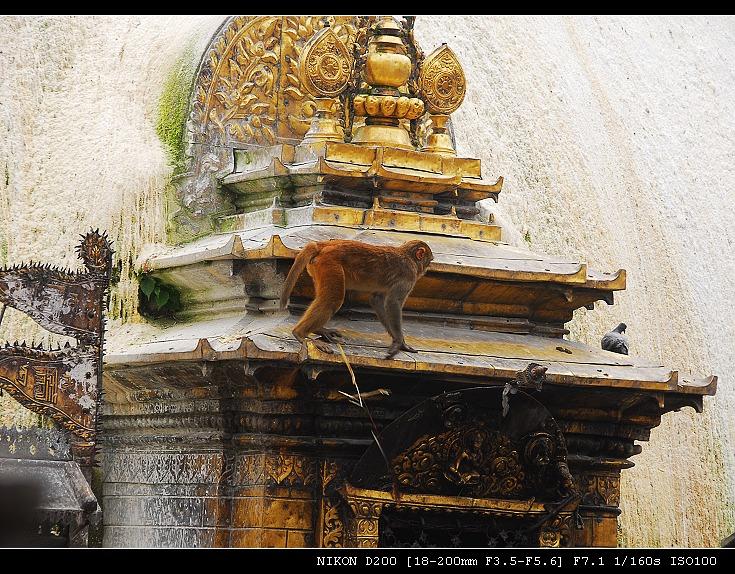 雪山 湖泊 寺庙____尼泊尔之旅(十二) - 西樱 - 走马观景