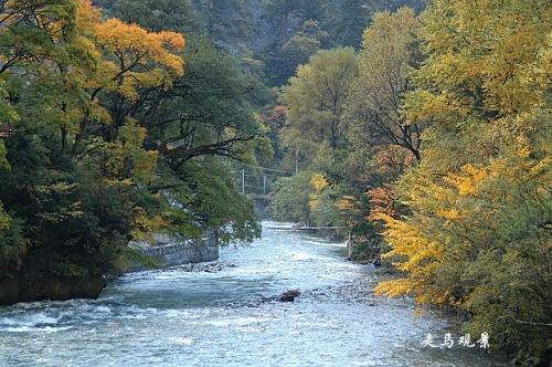 好色米亚罗___树与水 - 西樱 - 走马观景