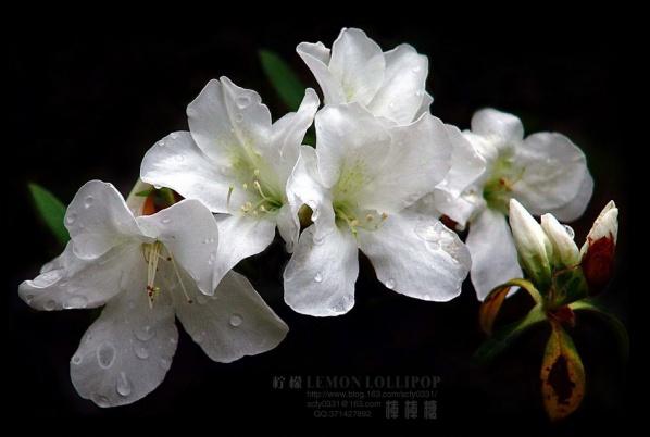 【原创摄影】_春情·秋韵 - 柠檬棒棒糖 - 柠檬棒棒糖的田园