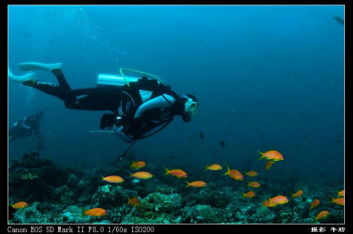 海洋动物刮画图片大全