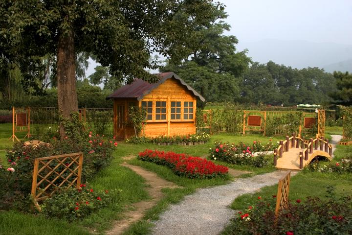 (原创摄影)植物园里的几张照片 - 刘炜大老虎 - liuwei77997的博客
