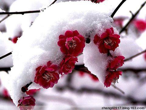 《春的祝福》(原创) - 空山听禅 - 岁月流金