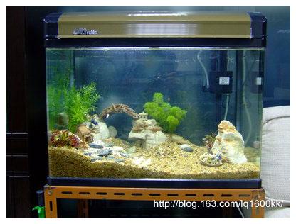 新翻的鱼缸 - lq - LQ的博客