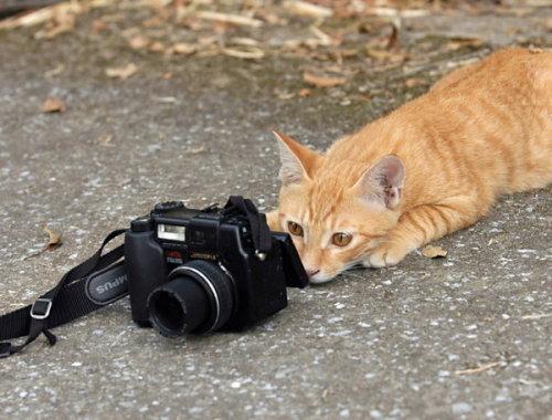 天下谁人不识君 - 老猫侠 - 老猫侠的博客