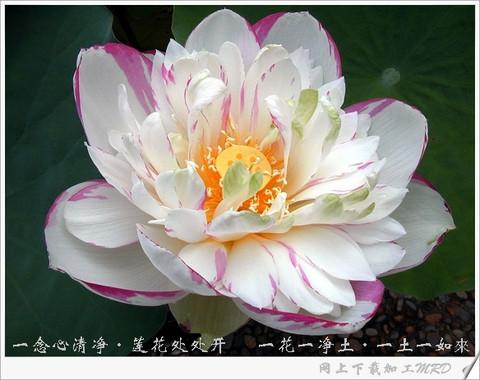 佛的-〖值得一读〗   正信的佛教→圣严法师著   ⒐佛教的根本教条是甚么?