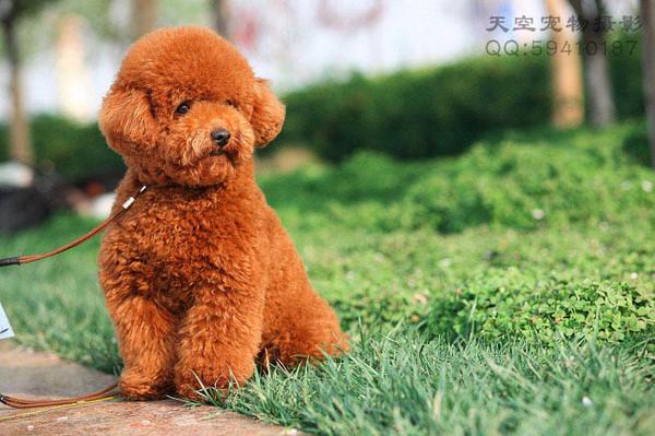 各种狗名及身价 - 馨语 - 馨语的博客