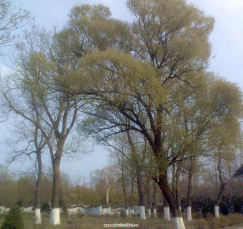 我是一棵秋天的树 - 肖梅 - 感悟人生