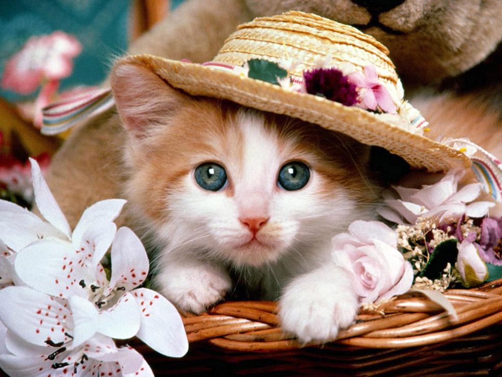 可爱的小动物图片,小动物的图片,各种小动物简笔画图片,小动物头
