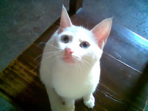 壁纸 动物 猫 猫咪 小猫 桌面 480_360图片