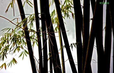 峨眉水中竹 (摄影) - 舒然 - 我的摄影   我的文字
