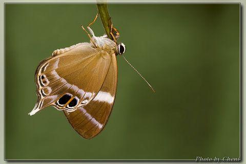[原创]永不合拢-蚬蝶 - Cheni - Cheni的蝴蝶馆