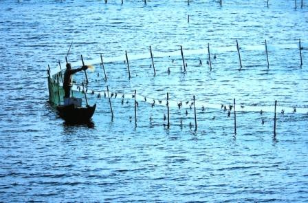 """从""""以鱼至渔""""到""""渔之教训""""的进一步 - qinweiping1956 - 吴中山人家"""