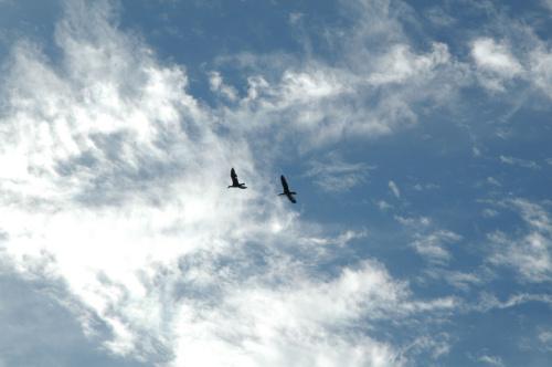 卑尔根到奥斯陆途中____水和云 - 西樱 - 走马观景