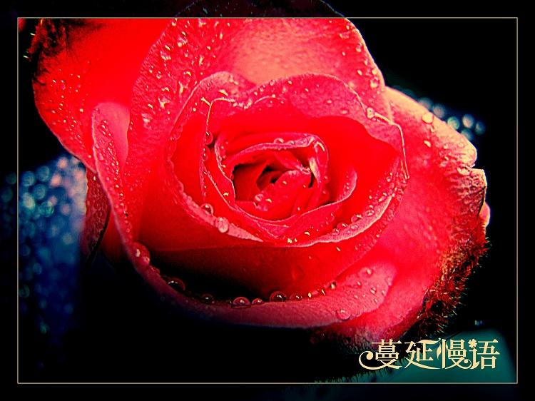 另类玫瑰——废片复活记 - 蔓延 - 蔓延慢语