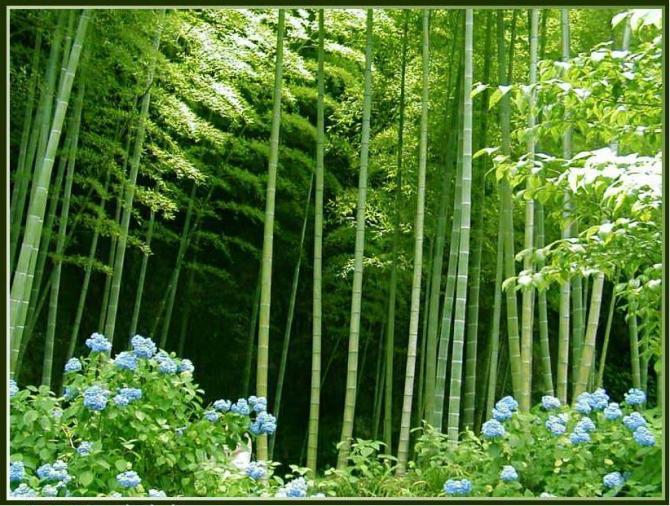 梅兰竹菊 - 竹苑清幽 - a950624wj 的博客