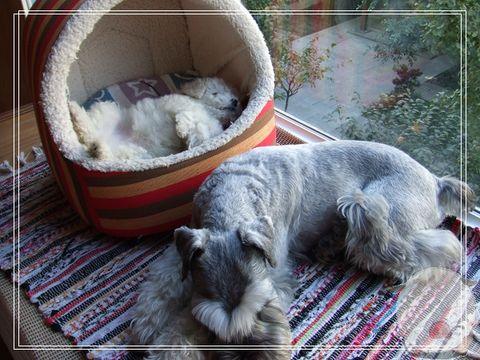 超级睡相 - 快乐的猪 - 一个小女人的幸福生活