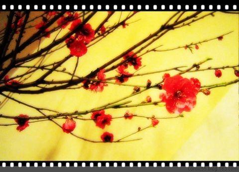 原创摄影【今年春花似旧年】 - jelly - 果冻の彩~秋色彩