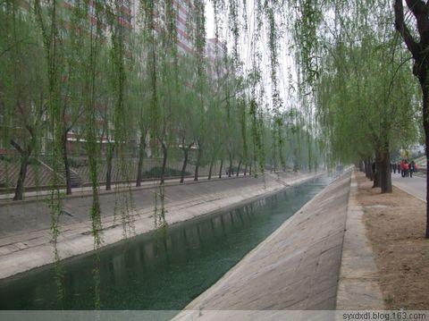 北京街道的花 - syxdxdl - 小草青青的休闲娱乐空间 欢迎朋友们的光临