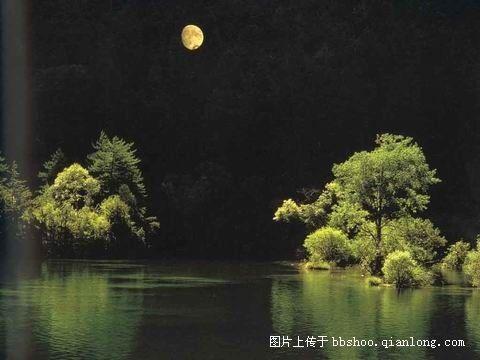 静夜思绪 - 真水无香  - 香格里拉 花开的地方