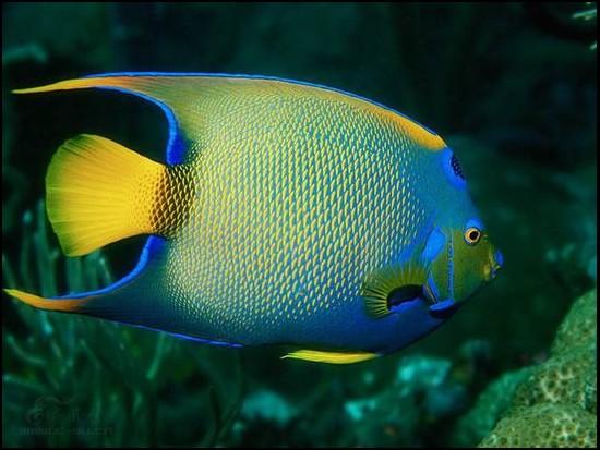 最漂亮的鱼_一生见过的最漂亮的鱼