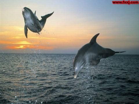 三娘湾的海豚