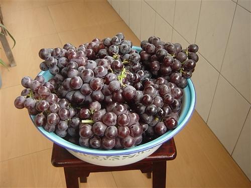 家庭自酿红葡萄酒  - am1970 - 十月秋风的博客