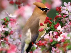 原创 江南一叟春日清晨观鸟 - 虎啸山林 - 虎啸山林欢迎您