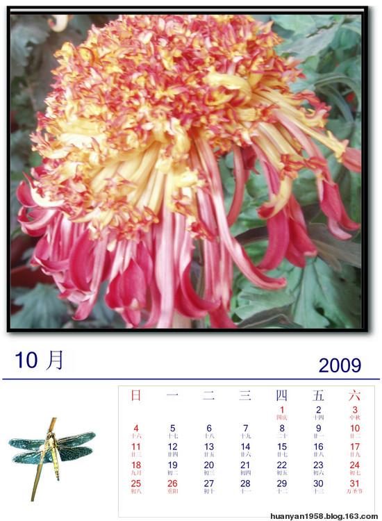 菊之韵:2009年挂历 - 欢颜 - 欢颜的博客