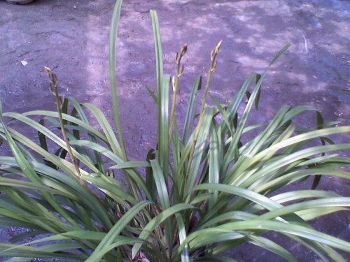 【博们女将才艺展示】  十五. 我的小庭院 - 雨忆兰萍 - 网易雨忆兰萍的博客